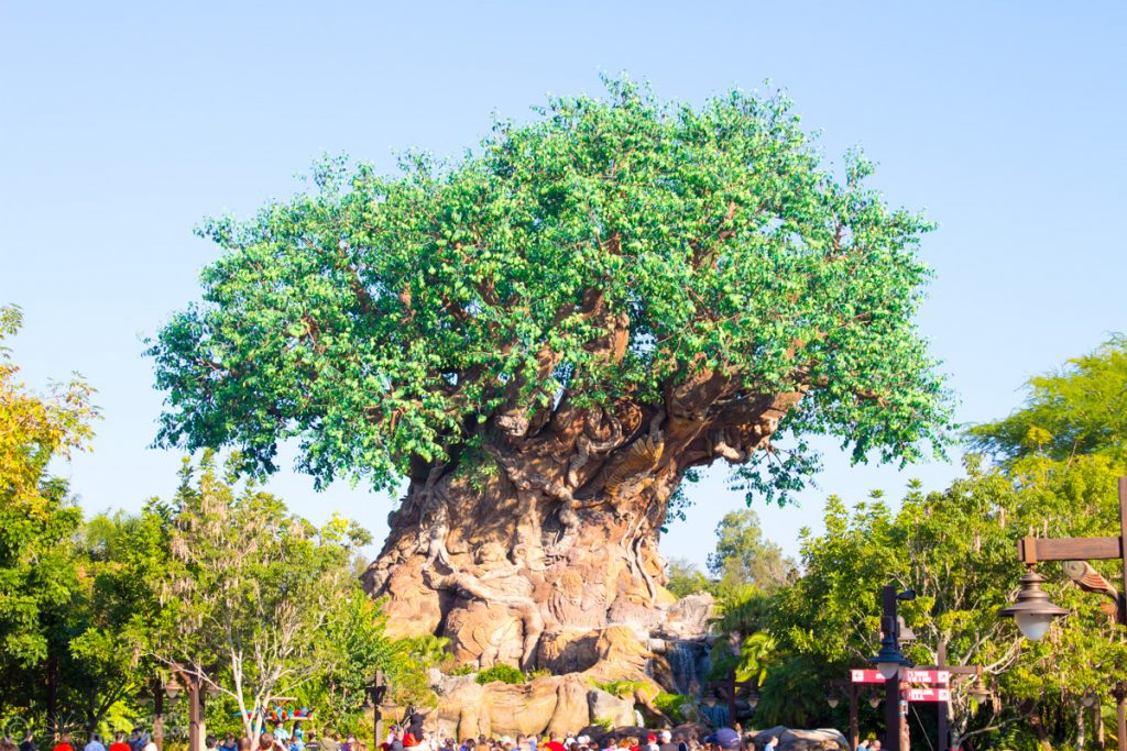 Tree of Life in Animal Kingdom