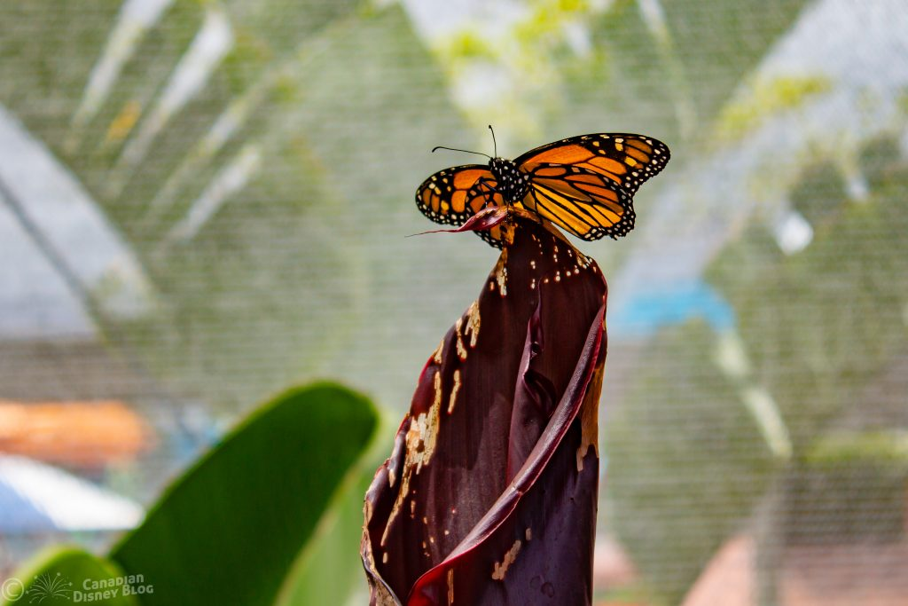 Butterfly at Flower & Garden Festival