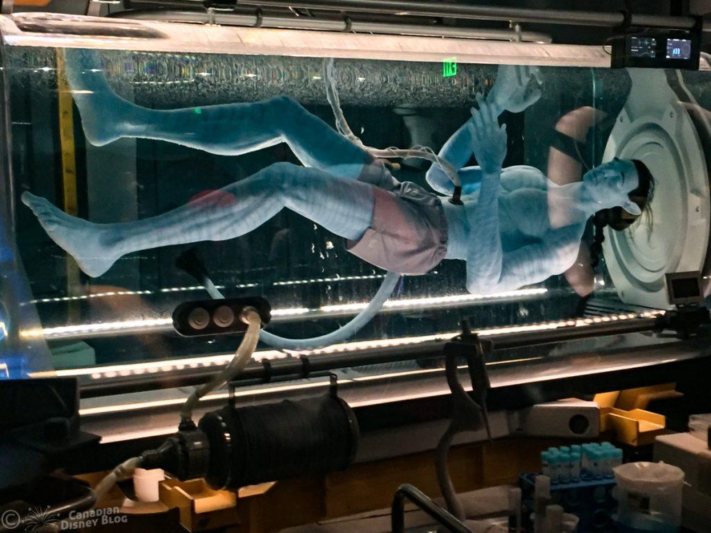Flight of Passage in Pandora at Disney's Animal Kingdom