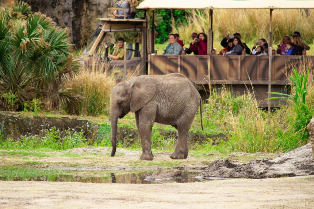 Caring for Giants - an Elephant Tour at Disney's Animal Kingdom