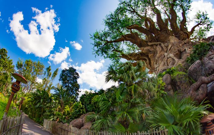 Tree of Life on Discovery Island at Animal Kingdom